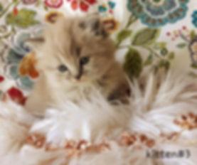 kitten 3 misfit.jpg