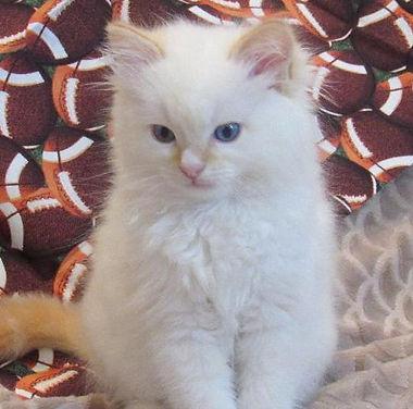kitten 5.jpg