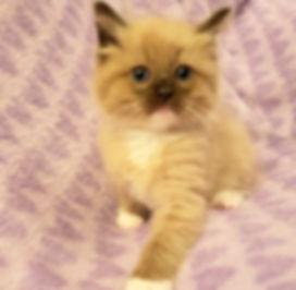 kitten 2 (2).jpg
