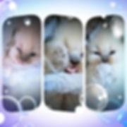 ellies 3 kittens march 31 2020.jpg