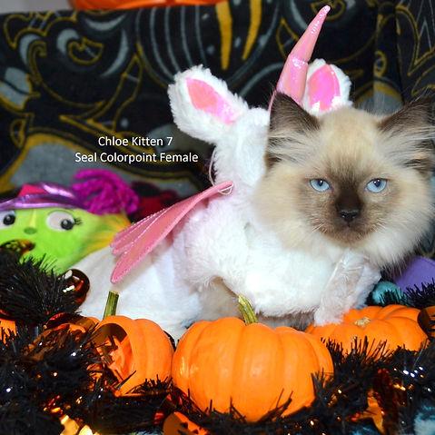 Kitten7web.jpg