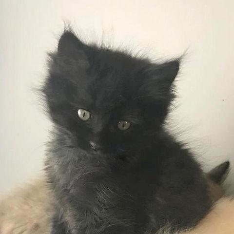 precious p kitten 4.jpg