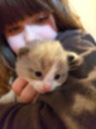 female kitten 1.jpg