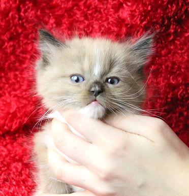 kitten 1 male.JPG