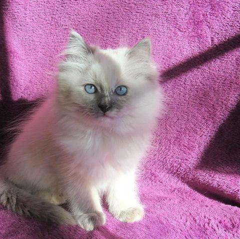 kitten 2 female.jpg