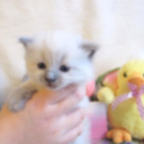 kitten 1 lp.jpg