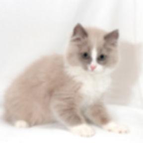 kitten 3 female.jpg