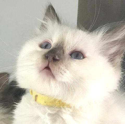 precious p kitten 1.jpg