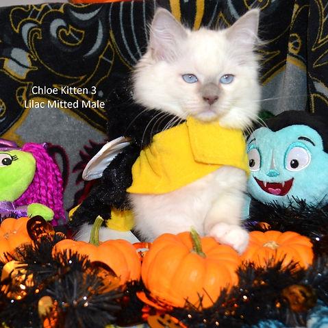 Kitten3aweb.jpg