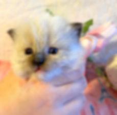 kitten 4 lp  ll.jpg