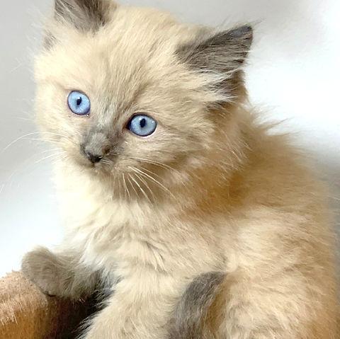 precious p kitten 2 lp.jpg