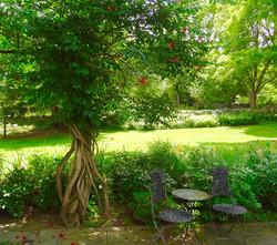 Garden Trumpet Vine