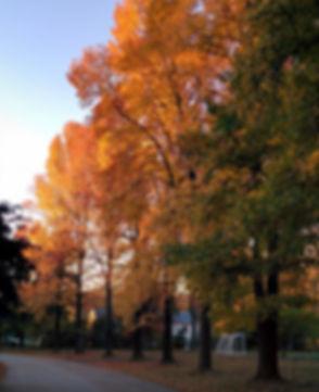 WisteriaDrTrees.jpg