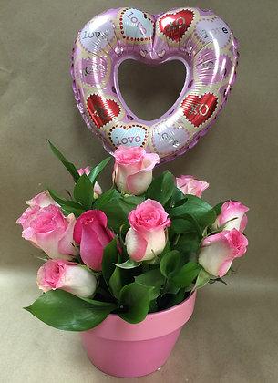 Pink Ladies Rose
