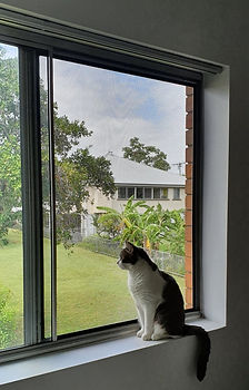 Cat looking out Guardian fall prevention