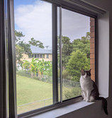 Keep your cat safe with Guardian fall pre