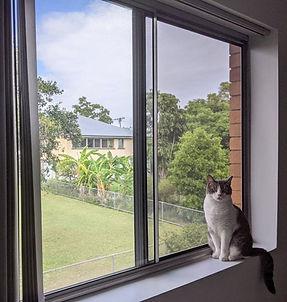 Keep your cat safe with Guardian fall pr