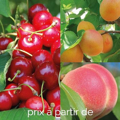 Gros fruitiers