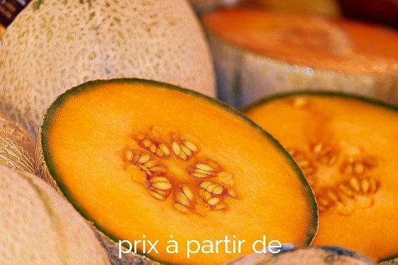 Melons greffés
