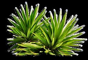Plants-Medium-Size-PNG.png