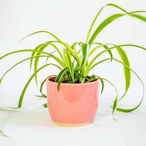 Small Planter - Rosa