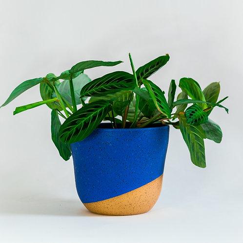 Medium Planter - Persian Blue