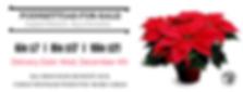 Poinsettias For Sale - 2019 (website pag
