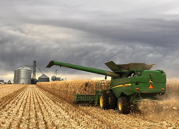 Harvested when corn has reached its full potential.