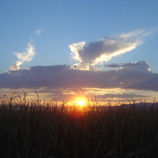 Arizona Corn Harvest-Sunset.JPG