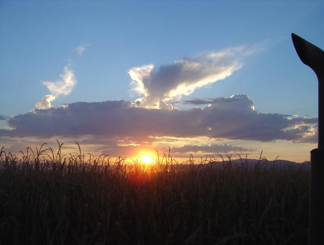 Arizona Corn Harvest-Sunset.JPG