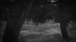 forestsnow01NB.png