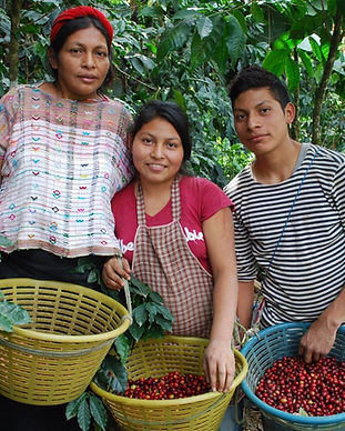kishe fair trade ethical organic sustainable coffee and chocolate directory