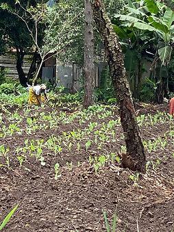 vegetable seedlings planted0fe769b-5f7b-