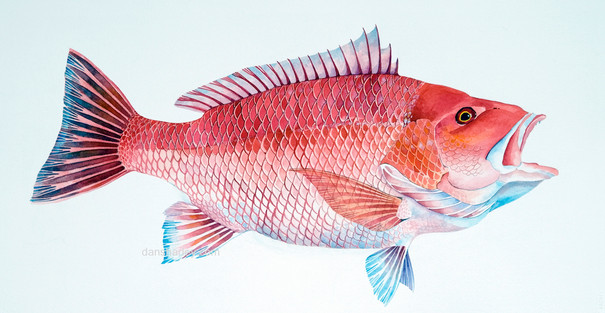 Fred's Red Snapper