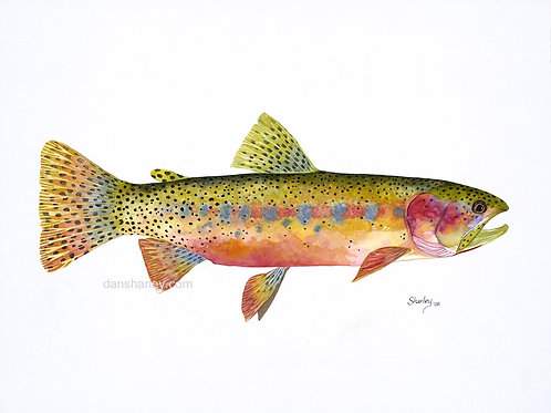 """Cutthroat Trout Study"""