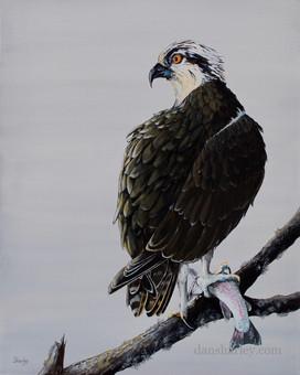 Osprey study