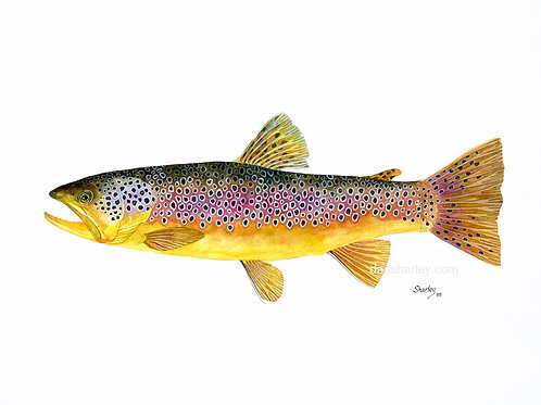 """Brown Trout Study"""