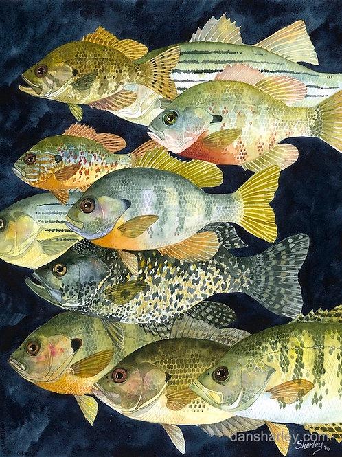 """""""Panfish"""""""