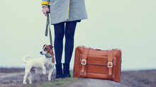 Hounds on Holiday — Traveling With Your Dog