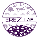 Erez lab logo_Final_PMS 2627 white back.