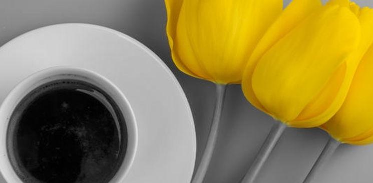 Tulips Color Splash.jpg