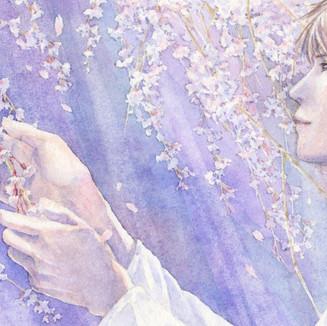 春/枝垂桜