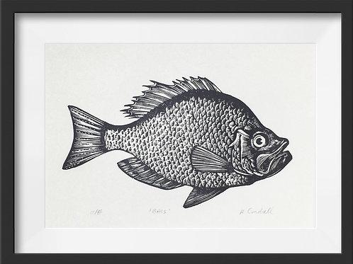 'Bass' Original Linocut Print