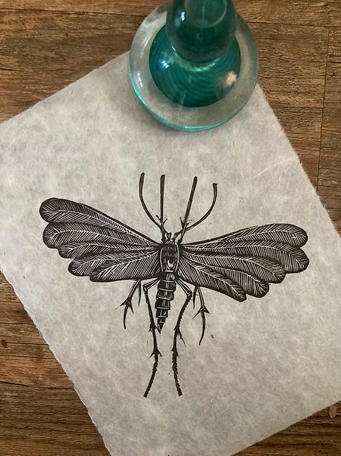 'Moth' Original Unframed Linocut Print