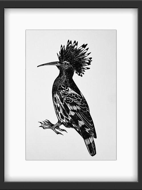 Hoopoe - Original Linocut Print