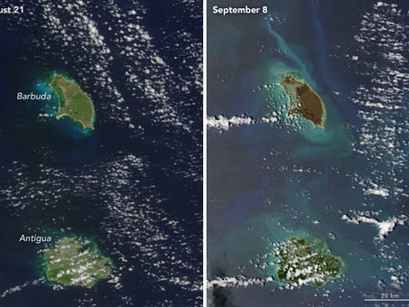 The Caribbean is Dying and No One Is Doing Anything About It
