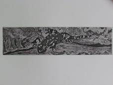 Fire Salamander IV