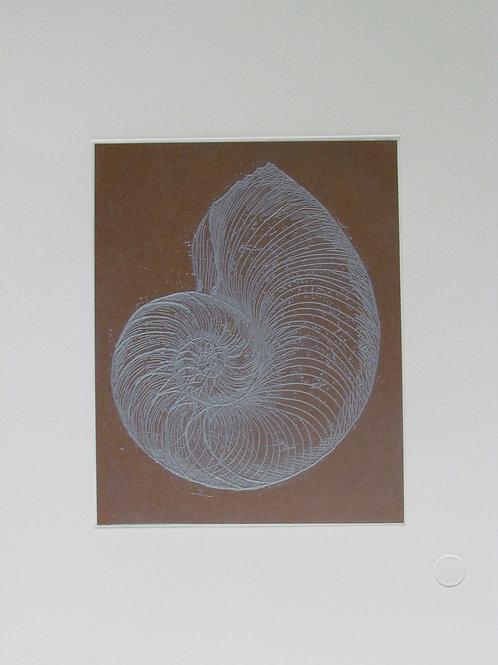 Tim Mitchell - Nautilus