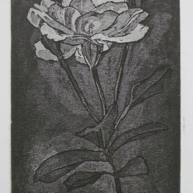 Rose Blanca
