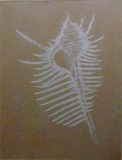Spine Sea Shell